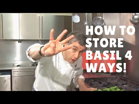 How To Store Basil - Four Ways!