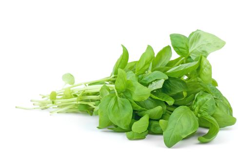 How to store basil for long