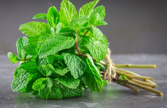 How to store mint keep it fresh for long