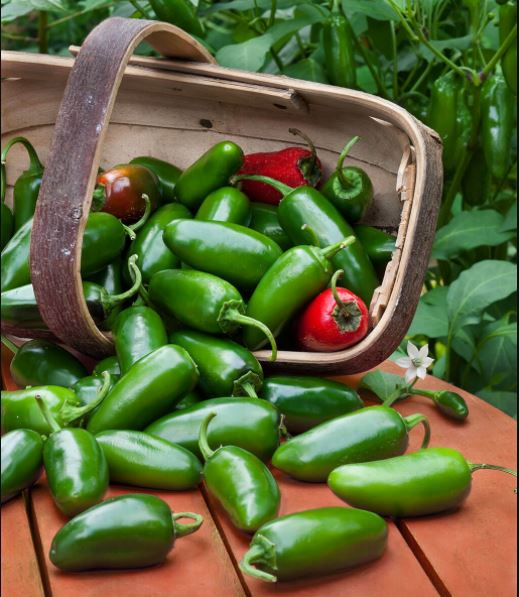How to store jalapenos